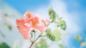 治愈系清新唯美花朵自然桌面壁纸
