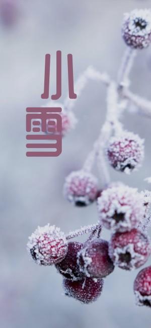 小雪时节之素裹的果实