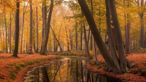 秋天金黄落叶唯美森林图片壁纸