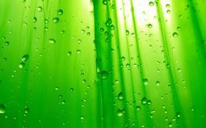 高清绿色护眼桌面壁纸