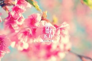 你好五月唯美樱花壁纸图片