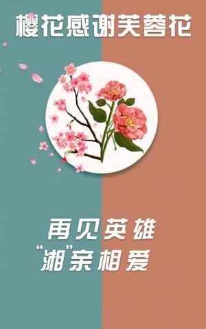 武大樱花感谢芙蓉花