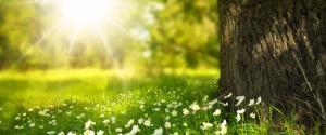 阳光明媚鲜花树木风景壁纸
