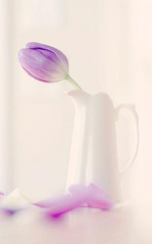 紫色郁金香的插花