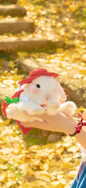 暖色调小白兔可爱手机壁纸