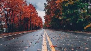 多彩秋日落叶风景图片桌面壁纸