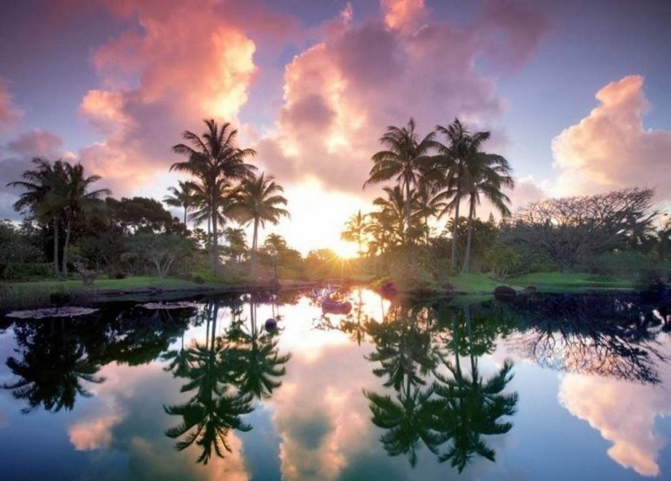 全球最美植物园图片