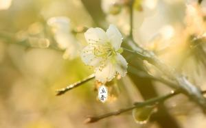 二十四节气之立春唯美花朵图片电脑壁纸