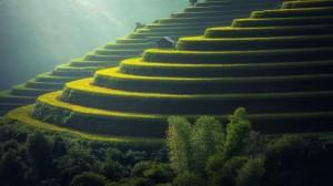 绿色梯田护眼自然风景桌面壁纸
