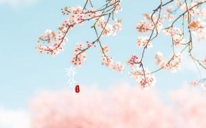 春分唯美清新高清桌面壁纸