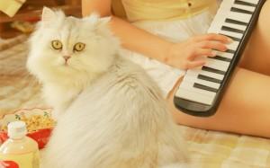 呆萌猫咪唯美居家图片壁纸