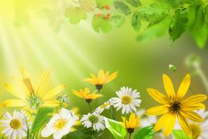 自然,树叶,花,雏菊,明亮的图片