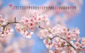 2020年8月清新樱花娇艳桌面日历壁纸