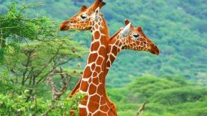 大自然可爱动物世界精选高清桌面壁纸