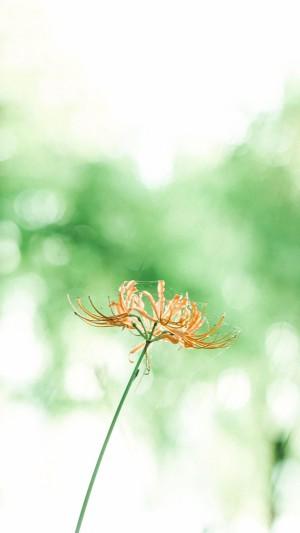 愿你把自己活得像一朵鲜花