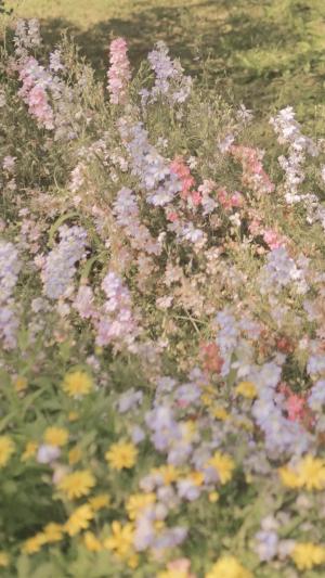 清新养眼鲜花绽放