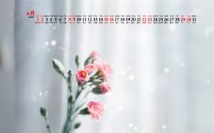2020年8月唯美植物花卉桌面日历壁纸