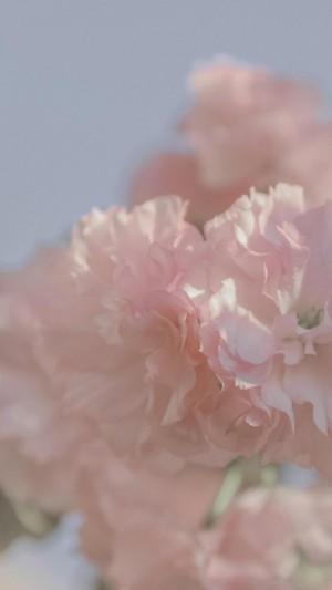 阳春三月,花朵绽放时