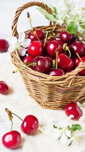 樱桃著子如红豆