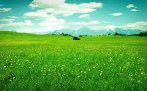 清明节之草原踏青图片