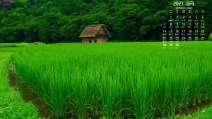 2021年6月绿色水稻日历壁纸图片