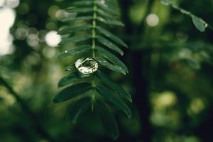 绿叶上的雨滴唯美治愈摄影