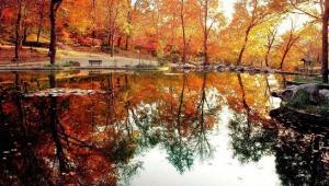树姿优美叶形秀丽的南京栖霞山红叶林