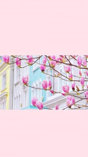 粉色樱花唯美手机壁纸
