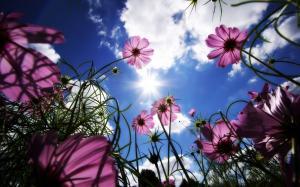 蓝天白云一缕阳光温暖照耀花朵盛开唯美壁纸