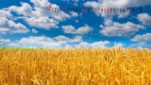 2020年9月秋天丰收的麦田高清日历壁纸