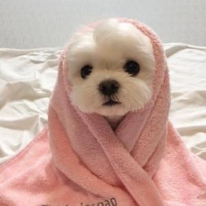 软萌可爱的小狗头像