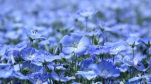 清新淡雅的亚麻花图片