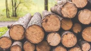 成堆的木材图片