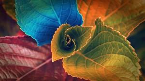秋天五颜六色的叶子