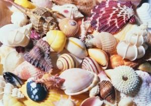 各式各样炫彩贝壳桌面壁纸