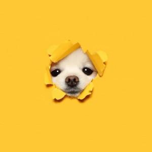可爱治愈的小萌狗