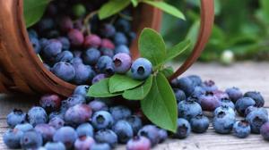 清新可爱的蓝莓桌面壁纸下载