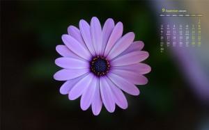 2019年9月艳丽微距花卉摄影高清日历壁纸