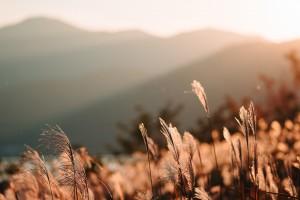 暖心晨光唯美风景写真