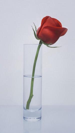 一支鲜艳红玫瑰