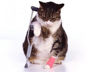 拄著拐杖的可愛又可憐的貓咪