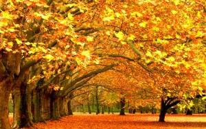 秋天枫叶唯美意境